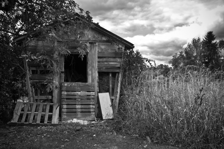forgotten-chicken-coop